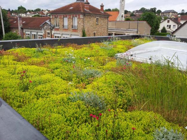 La végétalisation d'une toiture est-ce intéressant ?